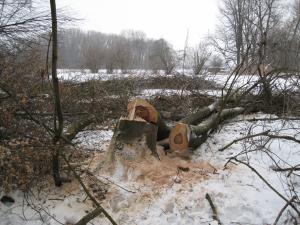 Kácení dřevin v NPP Hrdibořické rybníky