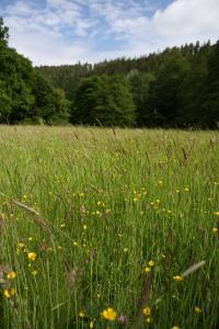 Kvetoucí louka v Terezském údolí